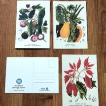IHS Postcards